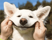 customer-service-dog.png