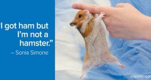 ham-not-hamster-700x352.jpg