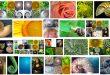 golden-ratio-examples.jpg
