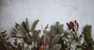 photo-1512389098783-66b81f86e199-1024x650.jpeg