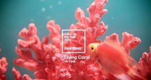 living-coral.jpg