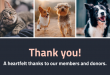 Nonprofit-Animal-Pet-Rescue-Email-Newsletter-Header_Venngage.png