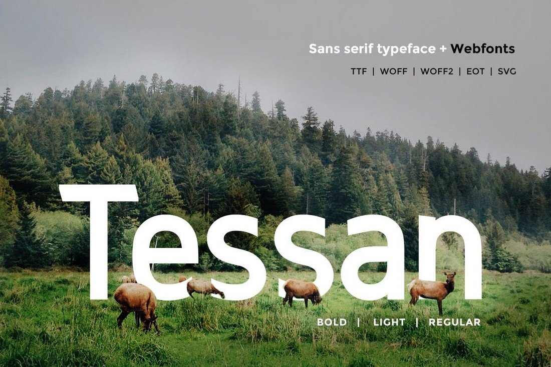 Tessan Sans - Modern Minimal Font