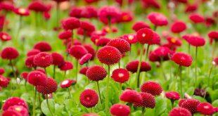 flower-spring.jpg